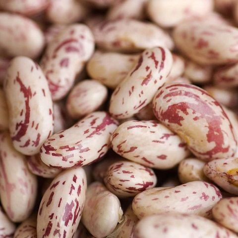 Borlotti bean tongue of fire [0.5 kg]