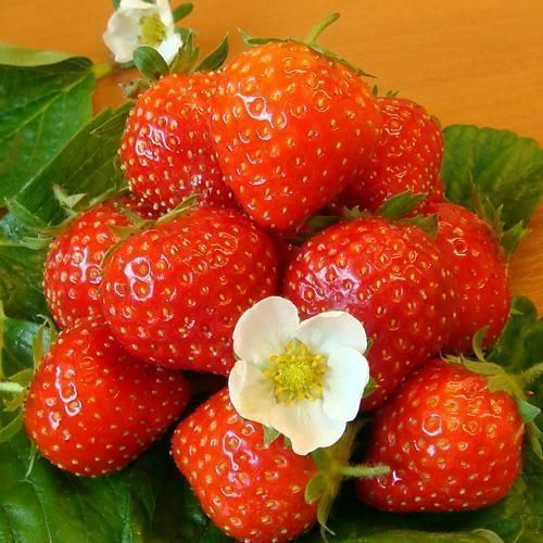 Strawberry 4 kg