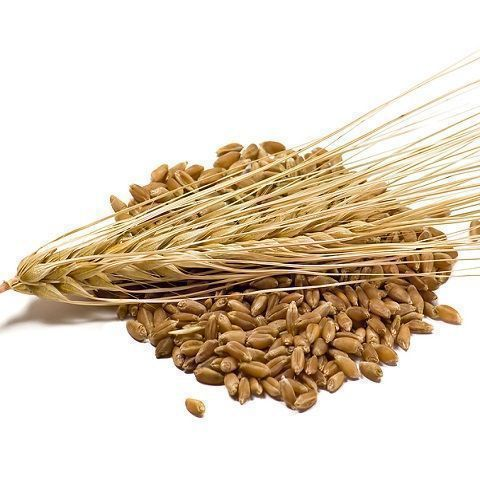 BARLEY DECORTICATED