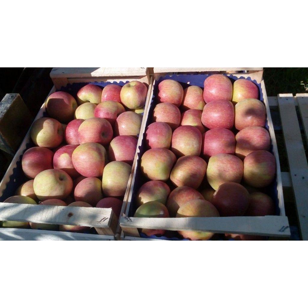 Confezione mele fuji 5 kg azienda agricola dolcetti giuseppe - Mele fuji coltivazione ...