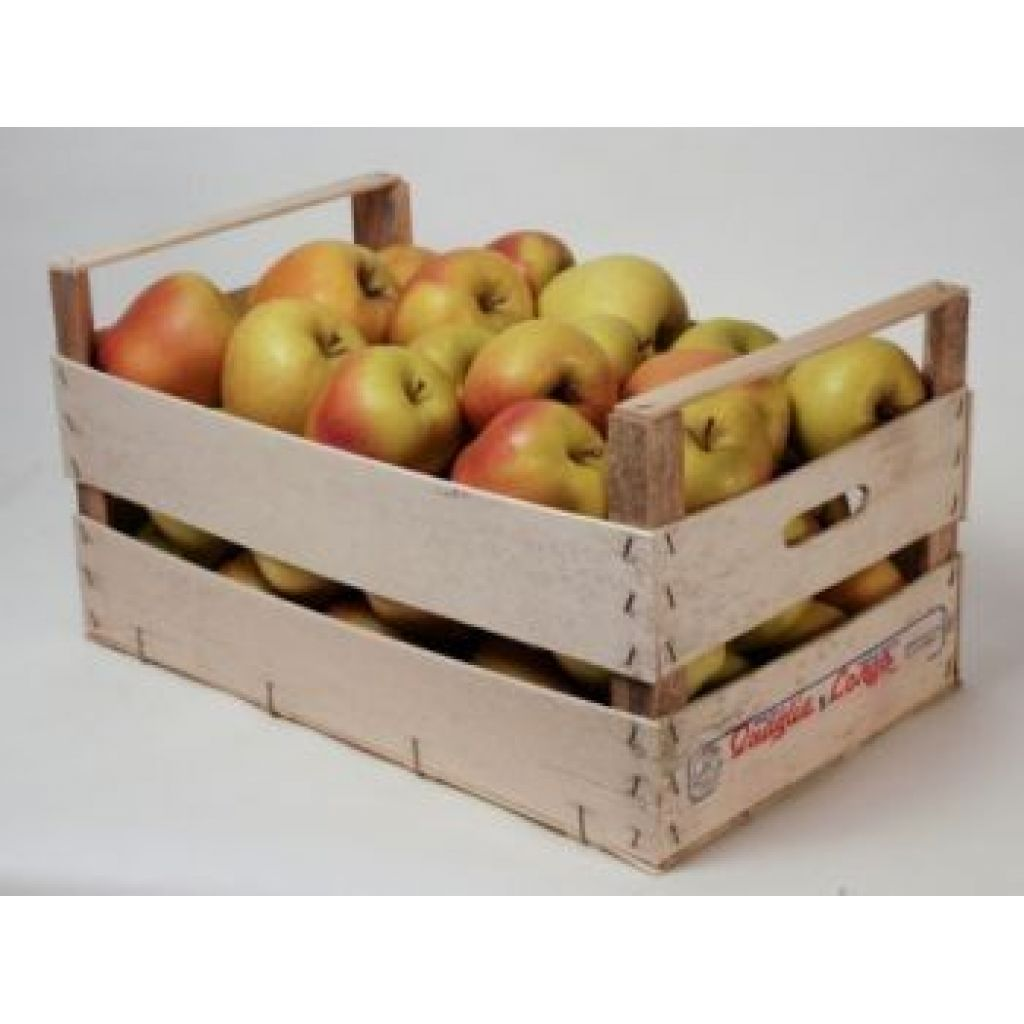Mixed apple 5 kg