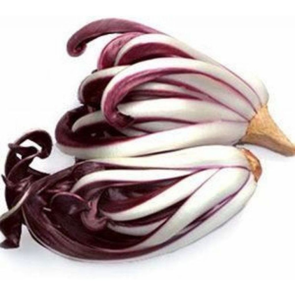 Treviso radicchio - ord. by piece